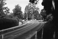 Mount Dandenong Tourist Road (photo 4) (Matthew Paul Argall) Tags: beirettevsn 35mmfilm kentmere100 100isofilm blackandwhite blackandwhitefilm road street mountdandenongtouristroad