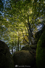 Con luz propia (SantiMB.Photos) Tags: 2blog 2tumblr 2ig bosque forest roquesencantades luz light rocas rocks garrotxa girona otoño autumn 500px geo:lat=4205265509 geo:lon=250468684 geotagged santfeliudepallerols cataluna españa esp