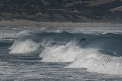 WEXIT (Ian@NZFlickr) Tags: surfing wave exit st clair dunedin nz