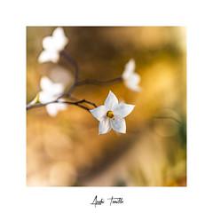 _DSC0112 (anahí tomillo) Tags: naturaleza nature nikond7500 flores flowers bokeh