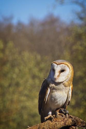 Bird Bokeh - 31. März 2019 - Schleswig-Holstein - Germany