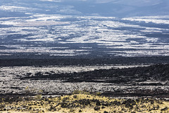 New Earth_27A9520 (Alfred J. Lockwood Photography) Tags: alfredjlockwood nature landscape abstract lavarock grasses bigisland hawaii afternoon winter mountain volcanicrock volcano