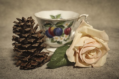 untitled (N.the.Kudzu) Tags: tabletop stilllife pine cone rose cup canondslr lightroom