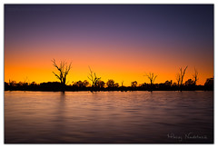 Glowing (Aperture Variance) Tags: glow sun sunrise dawn gold goldenhour australia southaustralia renmark river murray