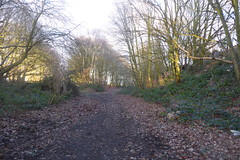 Old railway trackbeds, Athersley, Barnsley. (junction of former  Nostell and Carlton lines)   January 2019 (dave_attrill) Tags: junction cutting athersley north branch carlton disused railway line trackbed remains abandoned footpath barnsley southyorkshire yorkshire grass trees overgrowth vegetation january 2019