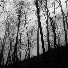 Lakeside Fog 052 (noahbw) Tags: d5000 nikon abstract blackwhite blackandwhite branches bw fog foggy forest hills landscape mist misty monochrome natural noahbw quiet silhouette spring square still stillness trees woods