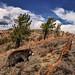 Black Bear (San Gabriel National Monument)
