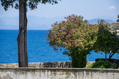 Corfu, Greece (13-7-2018) (TijmOnTour) Tags: tree sea island adriatic water mountain summer bloom flowers balkan
