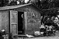 Almost Time For A Spring Cleaning (ACEZandEIGHTZ) Tags: blackandwhite bw monochrome nikon d3200 shed cart messy cluttered plywood door