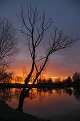 Silhouettes matinales - morning silhouettes (2/4) (gopillentes) Tags: arbres aube bois ciel hiver lac lumière noir nuit ombre reflets soleil étangs trees tree arbre dawn aurore lake morning darkness pond night reflections shadows sun sunset france bourgogne