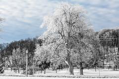 Frozen Niagara (HisPhotographs.com) Tags: niagarafalls niagara falls ontario canada trees nature snow winter cold lamp lamps lamppost light lights tree coveredinsnow clouds