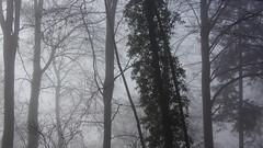 fog  in the wood (joschibelami) Tags: fog wood forest nebel mist badliebenzell 2019 badenwürttemberg deutschland tamron28200