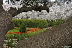 IMG_5588 (Roger Kiefer) Tags: dallas arboretum flowers outdoors beauty nature landscape