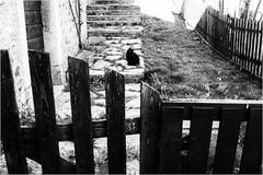 9 foto da Rigolato (andaradagio) Tags: andaradagio bianconero carnia bw italia italy friuliveneziagiulia nadiadagaro rigolato canon 24mmf28