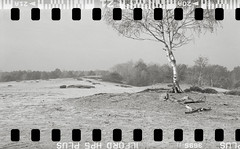 Bronica SQ-A-058-014 (michal kusz) Tags: pustynia kozłowska bronica sqa zenzanon 80mm ilford hp5 800 ilfosol 3 epson v600 medium monochrome monochromatic desert tree squere sand 135 35mm film frame heathers