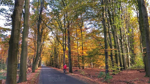 Autumn colors, Warnsveld, Netherlands - 2017