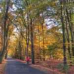Autumn colors, Warnsveld, Netherlands - 2017 thumbnail