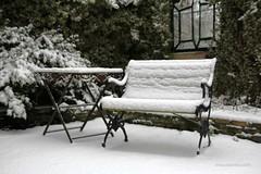TAKE A SEAT || LEKKER ZACHT (Anne-Miek Bibbe) Tags: sneeuw snow neige neve nieve tuin garden jardin giardino jardim natuur nature januari januar enero gennaio january janeirode winter inverno hiver canoneos700d canoneosrebelt5idslr annemiekbibbe bibbe nederland 2019