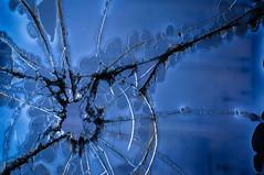 (jtr27) Tags: dsc00828l jtr27 sony alpha nex5n nex emount canon 50mm f14 ssc manualfocus broken glass abstract fd