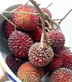 Allow me to introduce to you the one and only Pulasan. Like rambutan but very different.