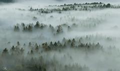 Nebel-Spitzen (Uwe Kögler) Tags: saxony sachsen sächsischeschweiz nebel misty fog nebelstimmung landschaft landscape deutschland germany bäume baumspitzen elbsandsteingebirge felsen