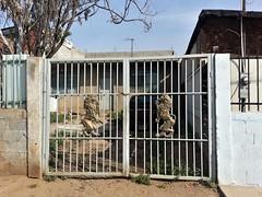 Escudo de Armas (cardigan48) Tags: habitacional puerta arquitecturas artesania cerco comunidad local vivienda