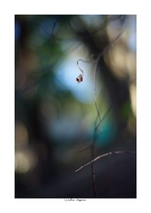 2019/3/8 - 10/21 photo by shin ikegami. - SONY ILCE‑7M2 / Carl Zeiss C Sonnar T* 1.5/50 ZM (shin ikegami) Tags: sony ilce7m2 sonyilce7m2 a7ii 50mm carlzeiss sonnar csonnar50mmf15 tokyo sonycamera photo photographer 単焦点 iso800 ndfilter light shadow 自然 nature 玉ボケ bokeh depthoffield naturephotography art photography japan earth asia