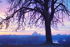 Feeling Blue (Marija Mimica) Tags: park tree town colors city blue panorama sky skyline abigfave