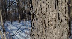 EOS_0119-1548 (DAN PHOTOGRAFIX) Tags: canon eos 6d reflex rehel stmichel paysage hiver winter sun soleil cold froid tree arbre ecorce bark snow neige glace ice