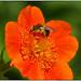 Islandmohn (2) (fotokunst_kunstfoto) Tags: frühling spring blüten flower blumen natur