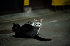 猫 (fumi*23) Tags: ilce7rm3 sony street sel85f18 85mm fe85mmf18 a7r3 animal alley katze neko gato cat chat ねこ 猫 ソニー