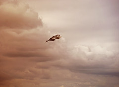 escape the dark cloudy world (kelsk) Tags: wolken lucht clouds reiger vogel bird heron