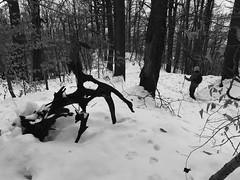 leselkedő rém (> akela <) Tags: morgó tolvajdénes tél