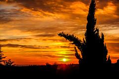 Contraluz (ameliapardo) Tags: contraluces cielo rojo atardecer sol nubes ciprés sevilla andalucia fujixt2 fujinon1855