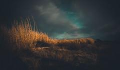 Golden Reeds (armandocapochiani) Tags: landscapes sea seascapes nature taranto reeds salento sky salentina armandocapochiani lidobruno tramonto tarantina clouds