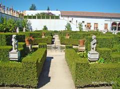 Jardim do Paço Episcopal, Castelo Branco 07 (Sofia Barão) Tags: portugal beira baixa jardim garden
