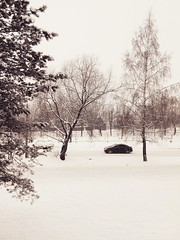 Typical December landscape (msergeevna) Tags: декабрь зима снег снегопад winter snow snowfall lumi talvi nature car tree