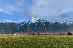 Mount Cheam - Agassiz, BC (SonjaPetersonPh♡tography) Tags: cheampeak mountcheam fraservalley thefraservalley bc britishcolumbia canada nikon nikond5300 mountainlandscape mountains landscape peak mountain scenery scenic nature farmland mtcheam agassiz community country