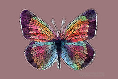 Butterfly Mosaic Packets of Color (Vern Krutein) Tags: earlymorningdewdrops 8965 petaluma california usa