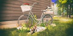 Keep Calm and Cycle On. (AlyceAdrift) Tags: bicycle vintage nature flowers roses cat calico radio siamese kittens cats spring grass suburbs neighborhood angelgrove trees season springfeels tmcreations secondlife photography blogging landscaping girly feminine floral simple