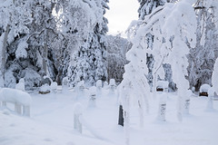 _ROS3566.jpg (Roshine Photography) Tags: winter yukonquest yukonterritory environmental dawsoncity cemetery snow yukon canada ca