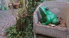 Kiss me! I'm the backyard frog-prince! (barbmz) Tags: hinterhof backyard mainz frog frosch