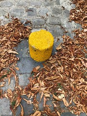 feuille-morte© (alexandrarougeron) Tags: photo alexandra rougeron fleur plante couleur paris ville urbain flickr