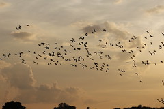 3 (Nils Stolpmann) Tags: landscape nature sea ocean boats yachts clouds sky sun sunrise sunset birds light sunlight nautic