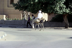 76-092 (ndpa / s. lundeen, archivist) Tags: nick dewolf nickdewolf color photographbynickdewolf 1976 1970s film 35mm 76 reel76 early1976 africa northernafrica northeastafrica sudan thesudan african sudanese people streetlife citylife streetphotography unidentifiedcity men robes whiterobes clothing whiteclothing robe whiterobe turban turbans headcovering headcoverings city town street pedestrians donkey mule baskets riding man tree animal khartoum jalabiya