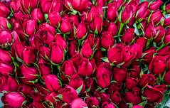 2018 - Mexico -  Mexico City - Red Roses (Ted's photos - For Me & You) Tags: 2018 2019 cropped mexico mexicocity nikon nikond750 nikonfx tedmcgrath tedsphotos tedsphotosmexico vignetting cdmx mercadodesancosme red redrule flowers flora roses