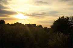 Summer Footpath (meniscuslens) Tags: cheddington sunset buckinghamshire sun