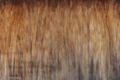 Triplex (Pieter Musterd) Tags: hout triplex middelbug pietermusterd musterd canon pmusterdziggonl canon5dmarkii canon5d nederland holland
