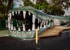 Swampy (Pete Zarria) Tags: green florida roadside tourist trap attraction sign alligator lizard reptile