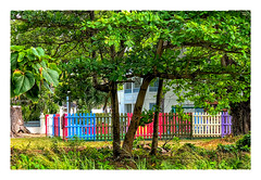 Fence in Hiding (Timothy Valentine) Tags: 2018 0418 caribbean tree friday vacation fence bridgetown christchurch barbados bb